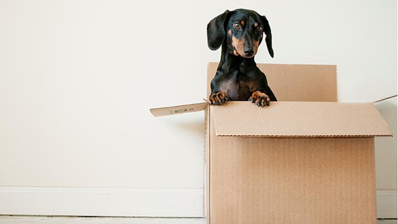 foto: levné stěhování